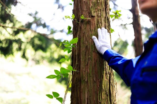 林業、自然のこと(3)