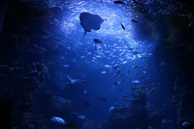 地震と海底・地底(5)