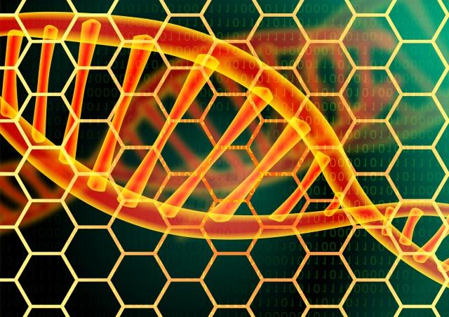 DNAの変化(2)